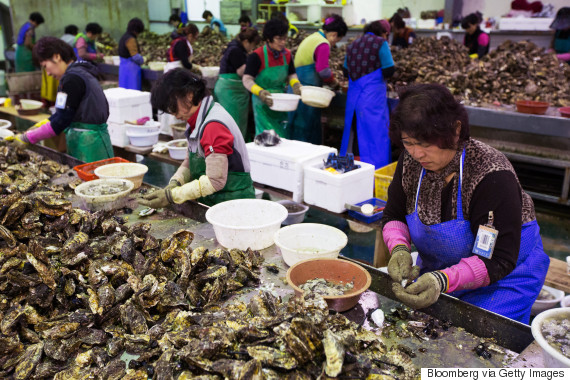 oyster korea