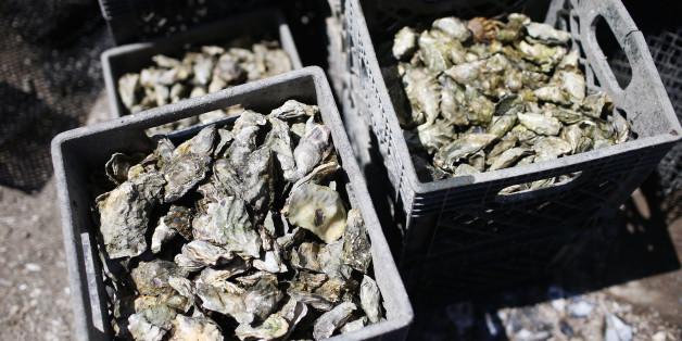 Les huîtres de Oualidia de nouveau interdites à la vente