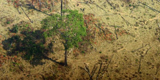 Área desmatada para criação de gado. Deforested area for cattle.