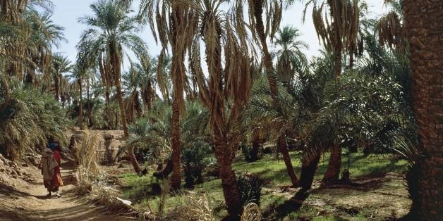 ALGERIA - MARCH 18: Date palms, Timimoun Oasis, Sahara Desert, Algeria. (Photo by DeAgostini/Getty Images)