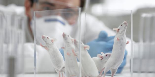 Tierversuche könnten auch bald schon in Medikamententests der Vergangenheit angehören