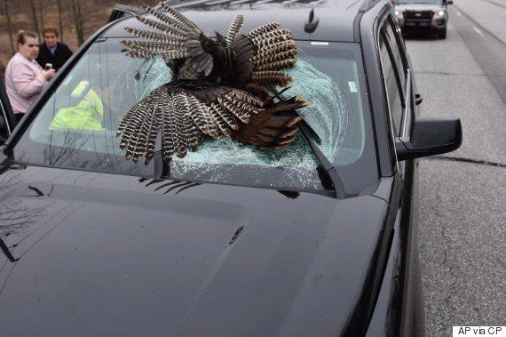turkey car