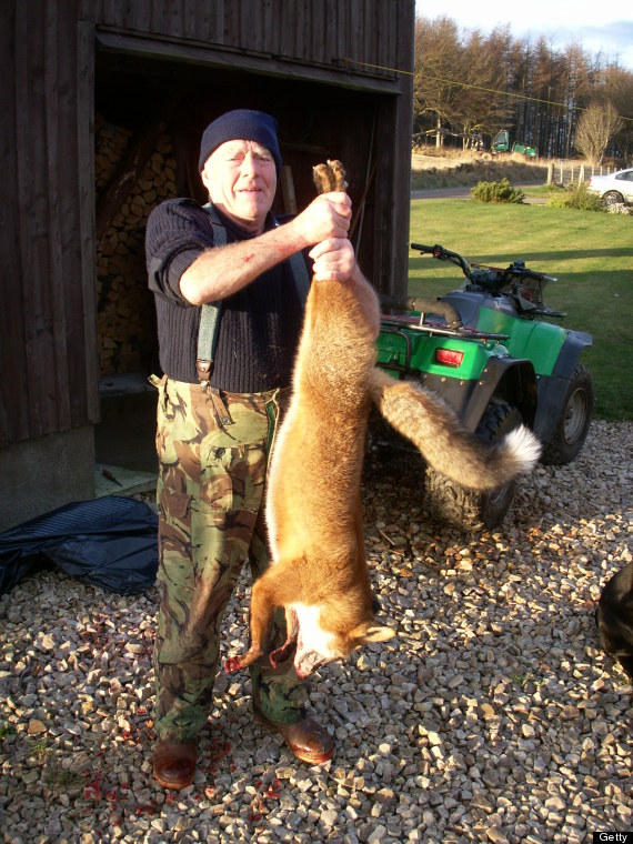 Chris Packham, TV Presenter, Says Foxes DON'T Attack And Britons Are 'Hell-Bent' On Attacking
