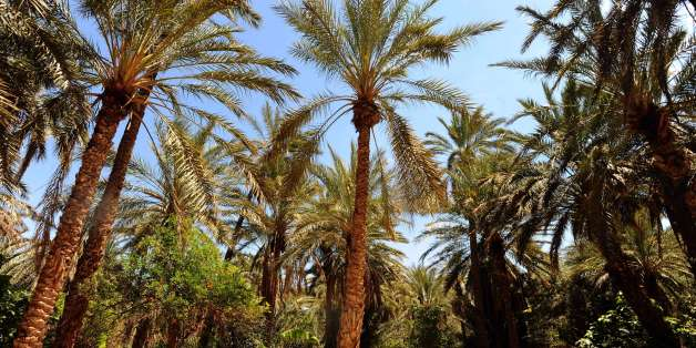 A general view taken on May 3, 2014 shows palm trees in an oasis in the town of Tozeur, in the Djerid region of south west Tunisia which is known for its large production of dates. AFP PHOTO / FETHI BELAID        (Photo credit should read FETHI BELAID/AFP/Getty Images)