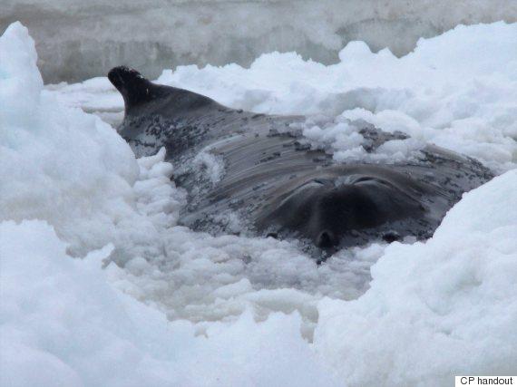 dead whale st johns
