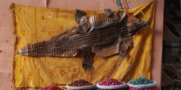 Une étude met en garde contre la vente illégale de reptiles dans les souks marocains