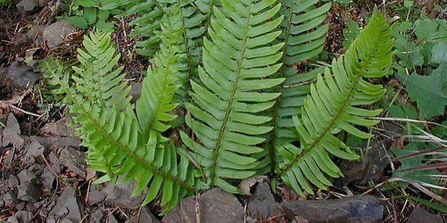 Dank dieser Pflanze könnte dein Smartphone-Akku künftig viel länger halten