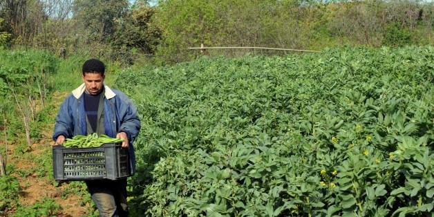 Agriculture r&d jobs
