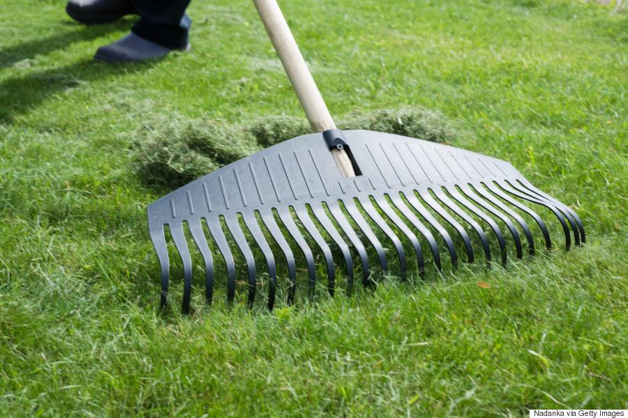raking lawn