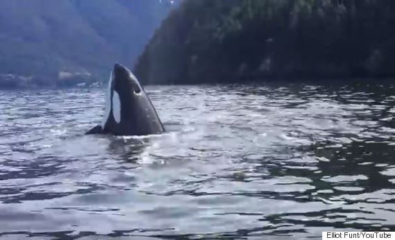 howe sound whales