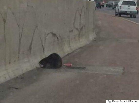 beaver ontario highway