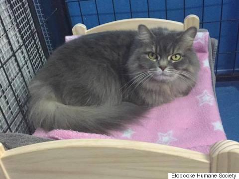 etobicoke humane society cat