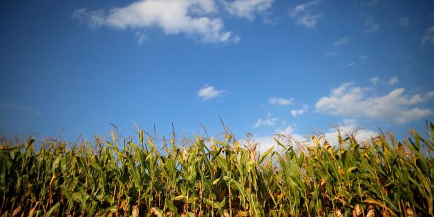 Vers une campagne agricole record au Maroc