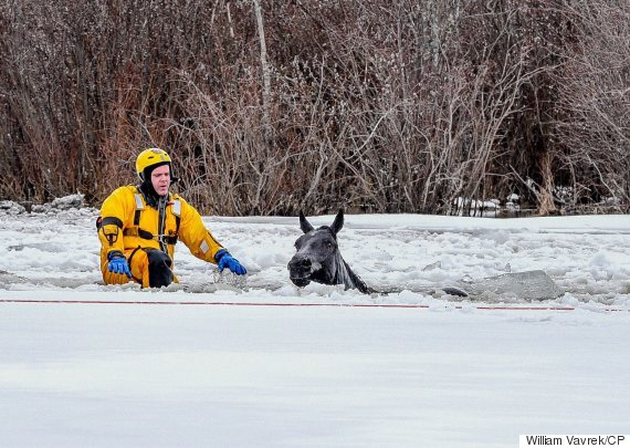 grande prairie horse rescue