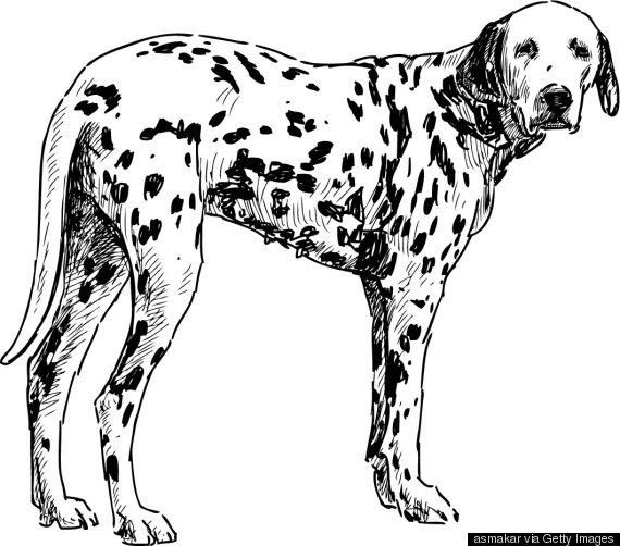 dog tail legs