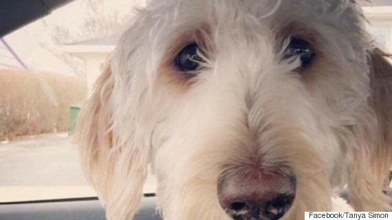 cooper chien perdu