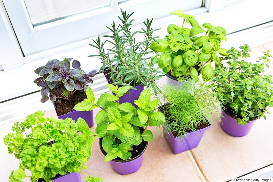 sunlight on herbs