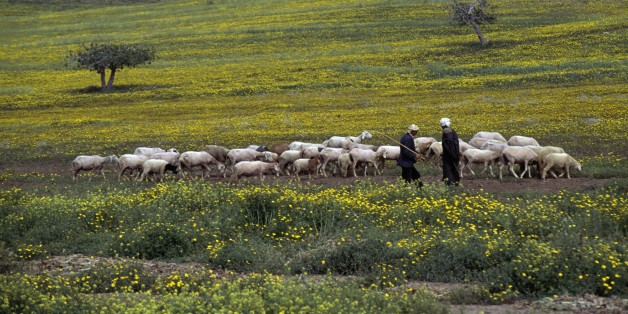 ALGERIA - MARCH 18: A flock of sheep and shepherds, near Arzew, Algeria. (Photo by DeAgostini/Getty Images)