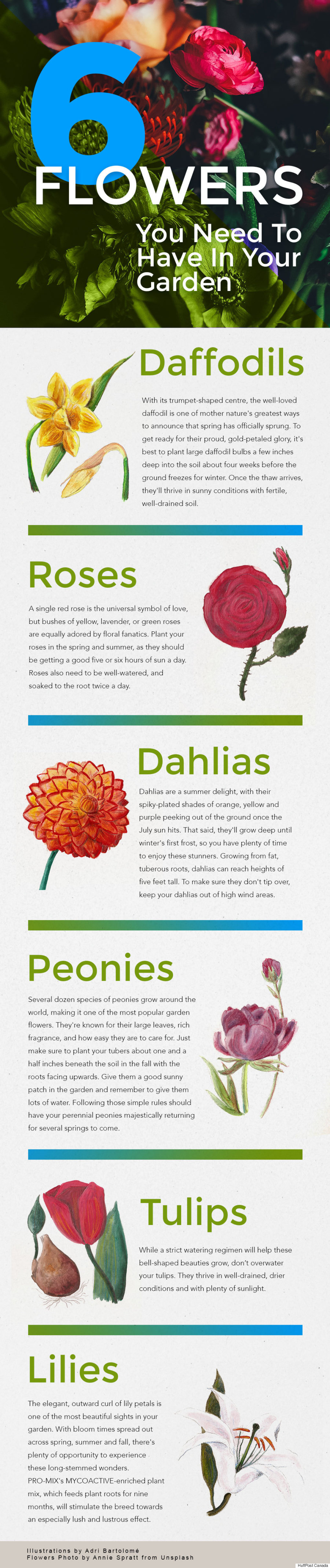 flowers infographic