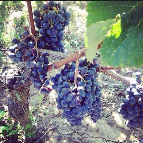 raisins mariotte