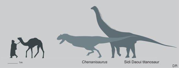 taille dinosaure