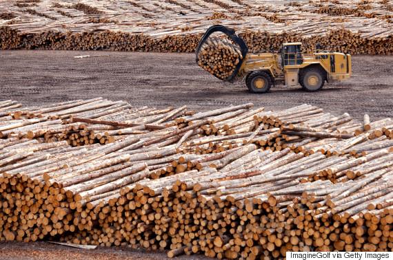 softwood lumber canada