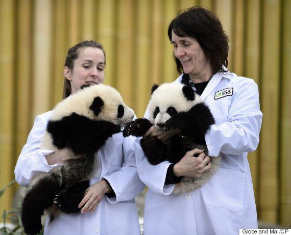 toronto zoo pandas zookeepers