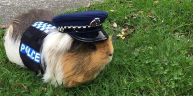 Elliot ist der neue Kollege der Polizei von Neuseeland.
