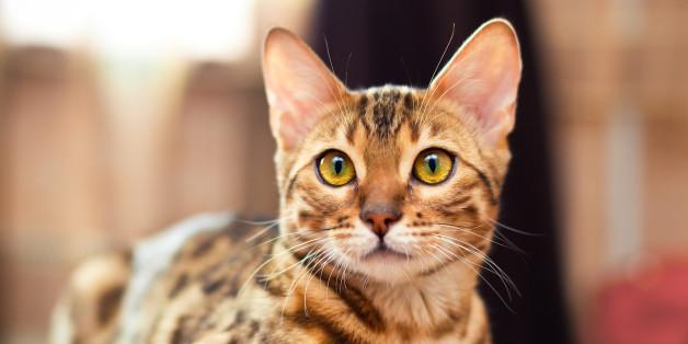 L'alerte sur les chats porteurs de la rage en provenance du Maroc a été levée.