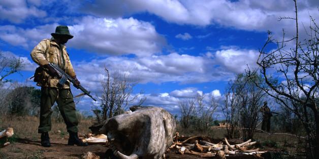 Tsavo East National Park, Coast, Kenya, Africa, East Africa