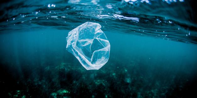 """Une """"COP"""" des océans bientôt organisée à New York"""