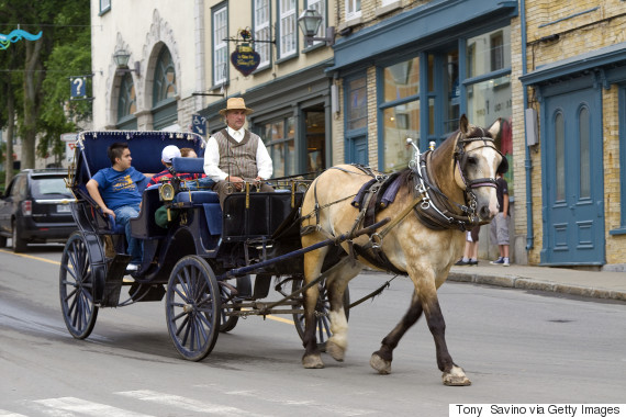 quebec city petition to ban horse drawn carriages gets 34 000