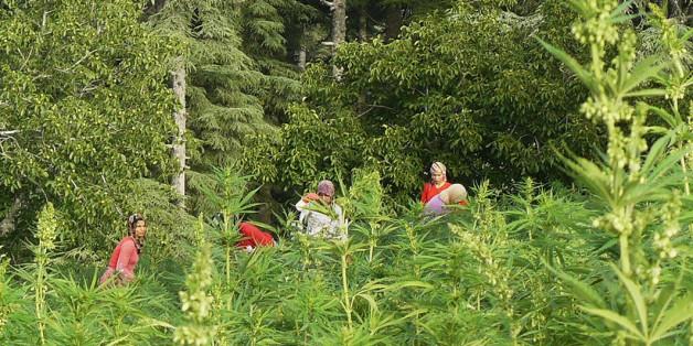 Adrar Nouh va développer la région grâce à ses plantations.