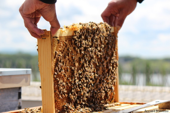 accueil bonneau honey