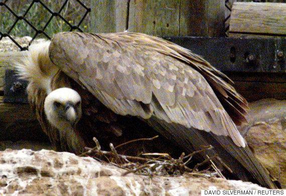 queer vultures