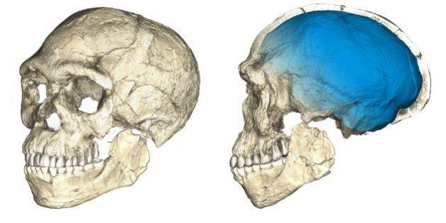 Les premiers Homo sapiens sont biens plus vieux qu'on ne le pensait (et ne vivaient pas là où on le croyait).