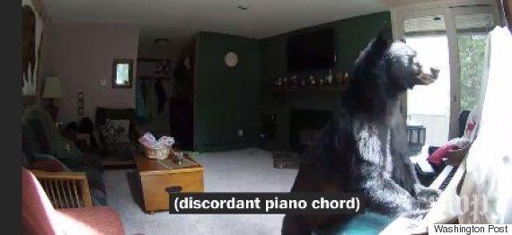 bear break in