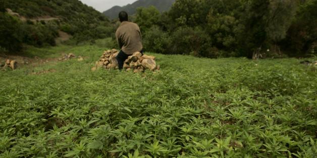 Un agriculteur dans un champ de cannabis près de Chefchaouen.