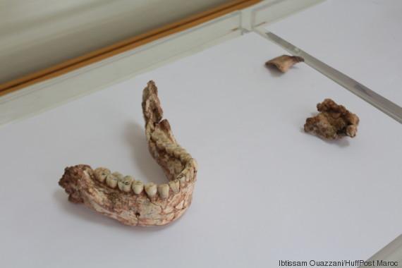 fossiles homo sapiens 3