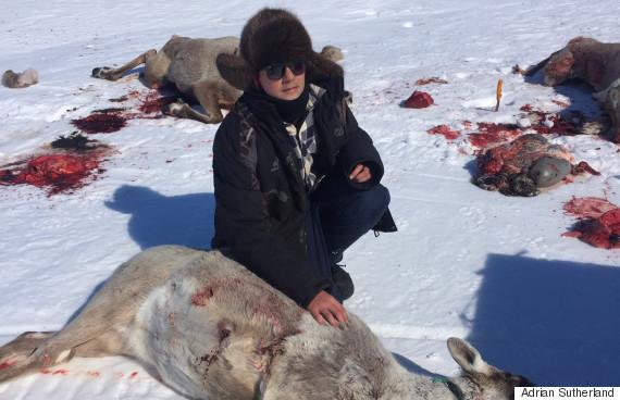 caribou hunt