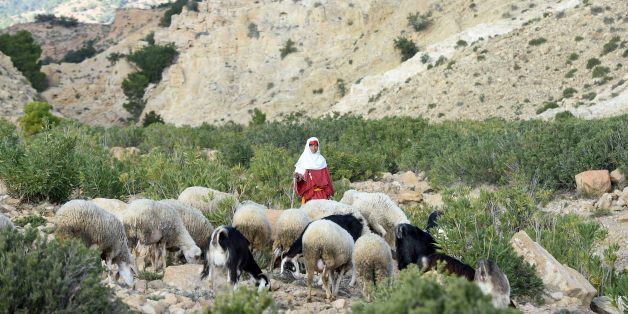 TO GO WITH AFP STORY BY INES BEL AIBA - Dhiba Soltani, 40, a Tunisian female herder watches her flock on Mount Mghilla on December 15, 2015 between Kasserine (some 360 kilometres south of Tunis) and the central town of Sidi Bouzid. Dhiba is a cousin of the 16-year-old shepherd, Mabrouk Soltani, who was slaughtered and beheaded by jihadists on November 13, 2015 in Tunisia's central governorate of Sidi Bouzid.  