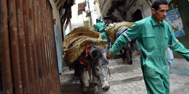 A garbage collector leads donkeys in the old part of Algiers, known as the 'Kasbah', on May 22, 2017 as they collect the rubbish in the alleyways of this medina built during the 10th century under Zirid rule.  It's a rubbish job, but someone has to do it. Or some animal: in the alleyways of Algiers' famed Kasbah, donkeys shift tonnes of trash every day.  / AFP PHOTO / RYAD KRAMDI        (Photo credit should read RYAD KRAMDI/AFP/Getty Images)