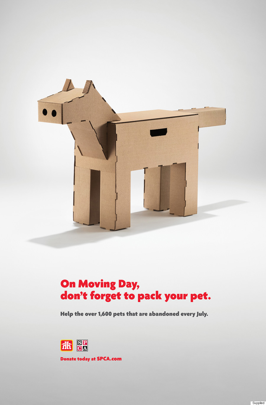dog moving box