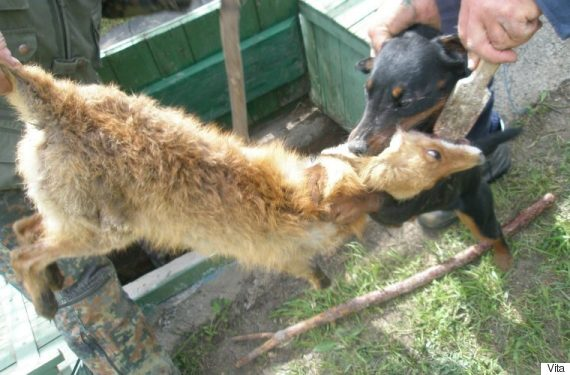 hunting dog training center
