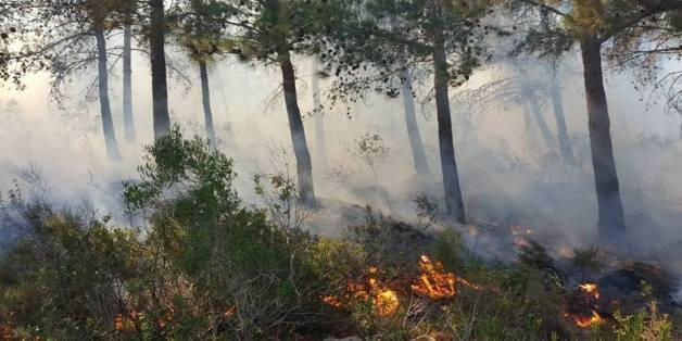 L'incendie de la forêt de Mediouna à Tanger circonscrit, près de 230 hectares ravagés