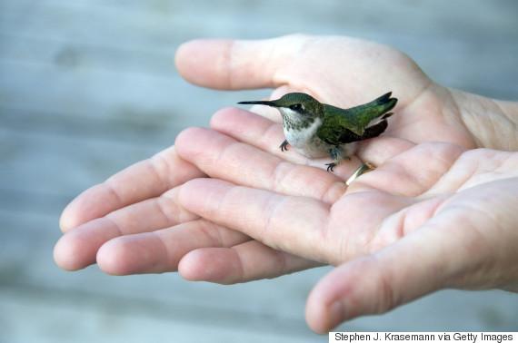 hummingbird hand