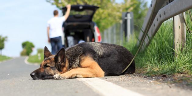 Familie setzt Hund an Raststätte aus – dann mischt sich ein Lastwagenfahrer ein