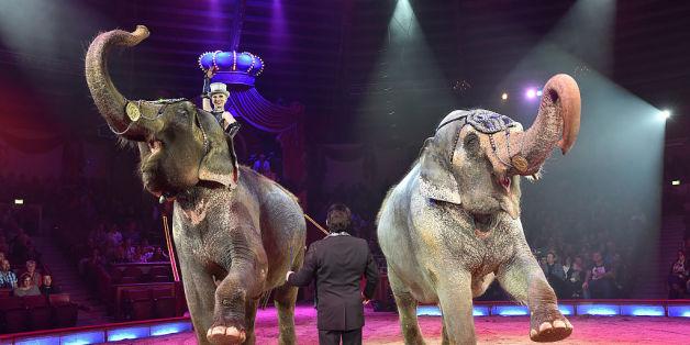 Die Grünen wollen die Tierrechte stärken – und Wildtiere aus dem Zirkus verbannen