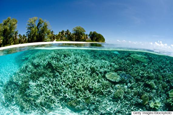 fish ocean