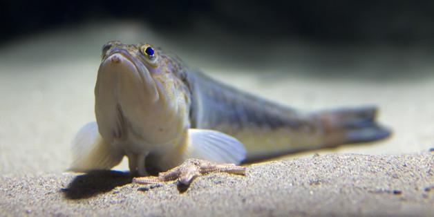 Das ist Deutschlands giftigster Fisch - er wurde schon in beliebten Urlaubsregionen gesichtet